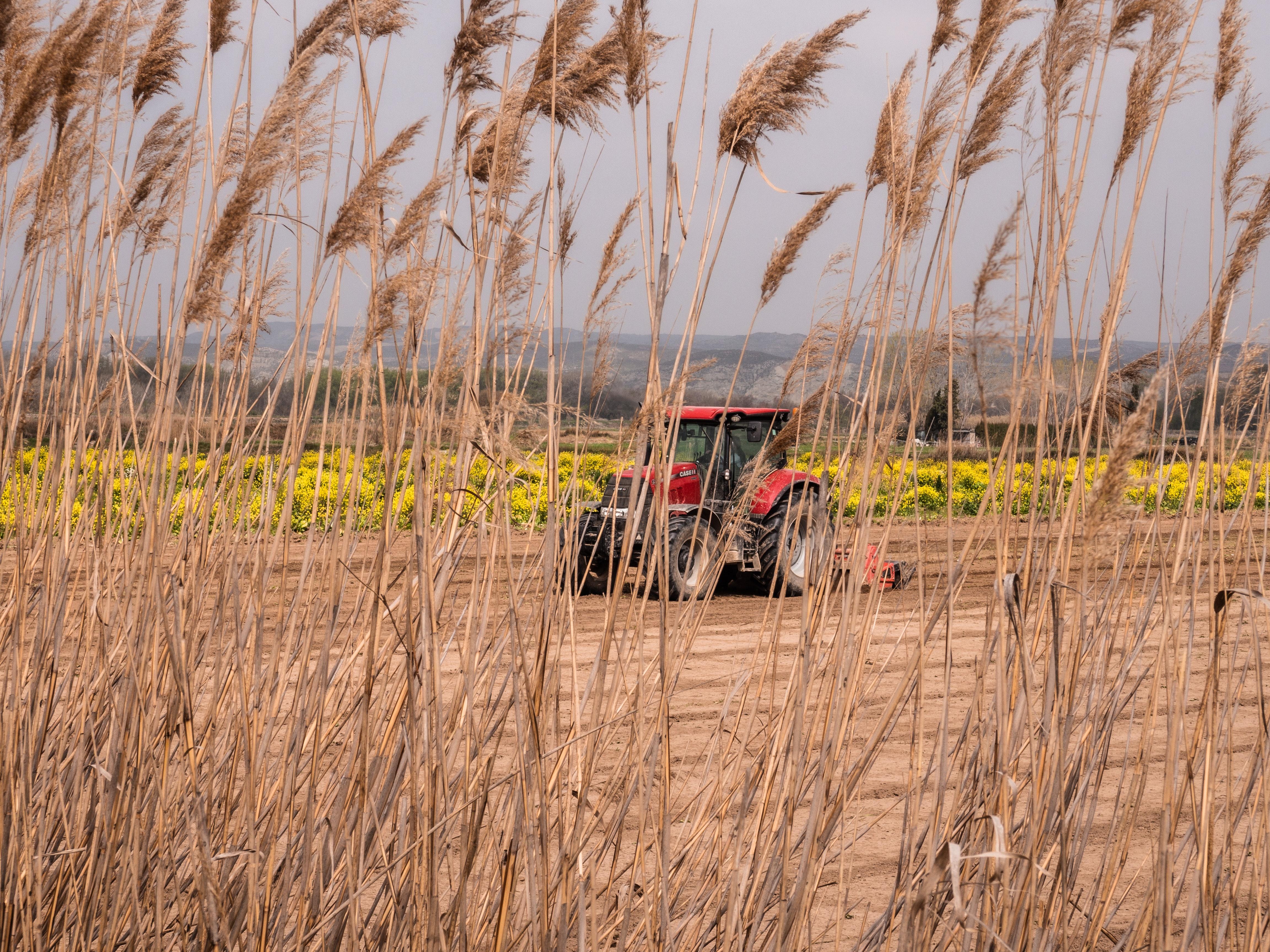 As Exportações do Agronegócio do 1º Semestre de 2021