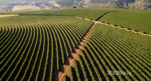 Agronegócio e perspectivas para 2021
