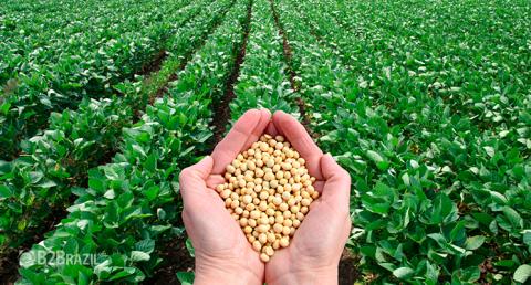 A importância do Brasil na produção mundial de soja